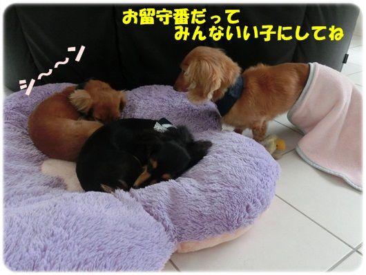 CIMG6121-20121117_20121117092134.jpg