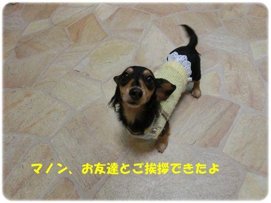 CIMG5802-20121112.jpg