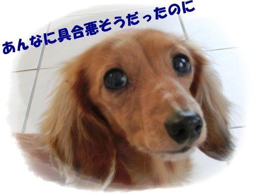 CIMG20121120 (2)