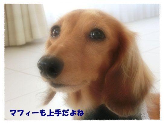 CIMG7937-20121208.jpg