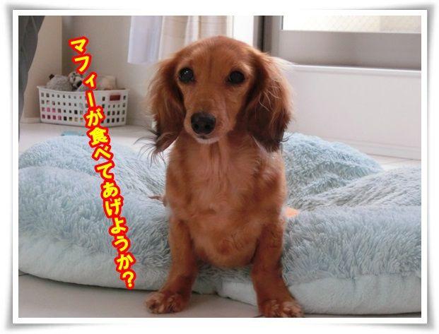 4_20131120114132987.jpg