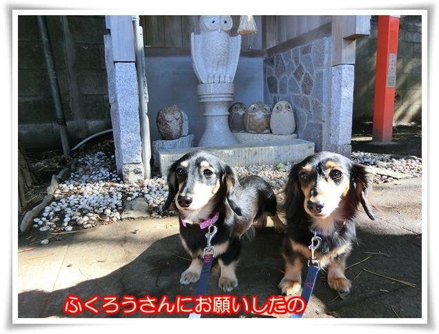 11_2014112206425498f.jpg