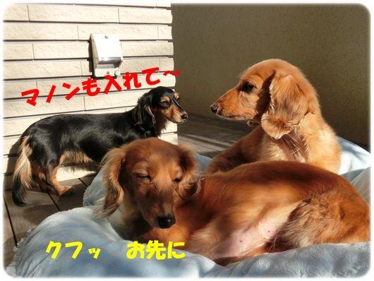 CIMG0253-20130204.jpg