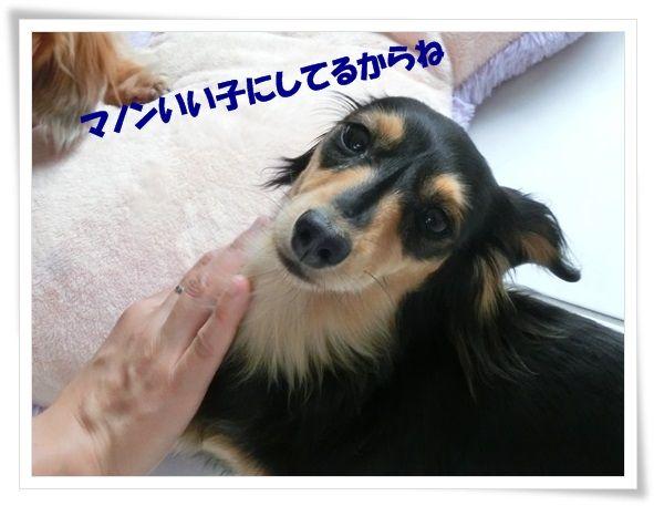 10_20130618115055.jpg