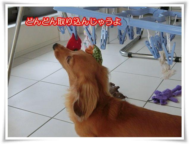 4_20140714070407e9a.jpg