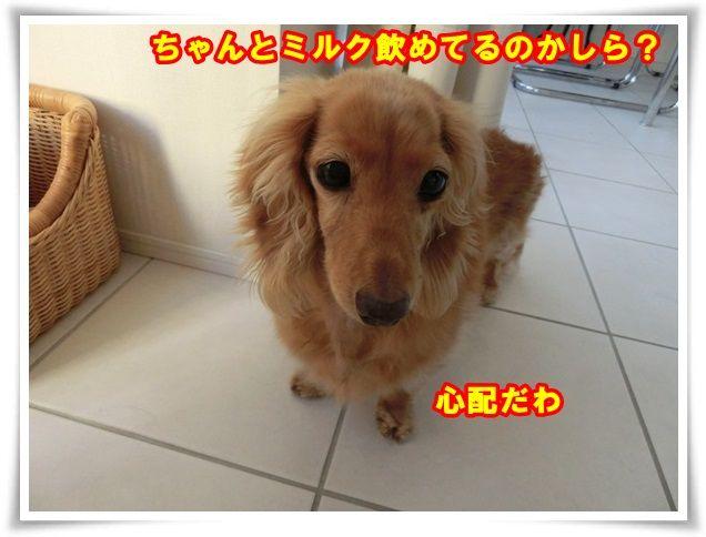 3_201312261015303fb.jpg