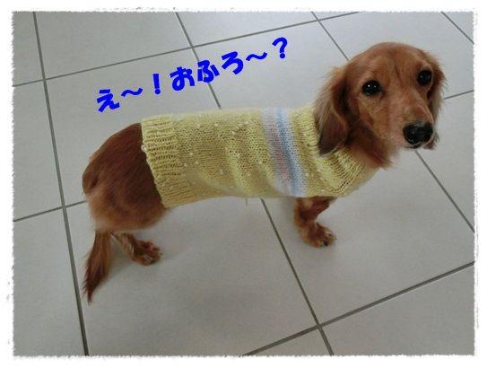 CIMG6339-20121122.jpg