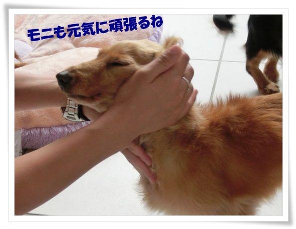 8_20130618115047.jpg
