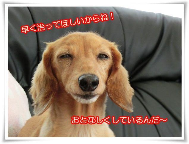 7_20140801100946ce2.jpg