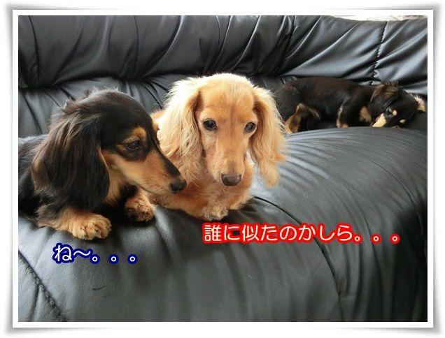 9_20140717090014f83.jpg