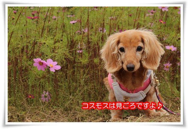 25_201510102209324da.jpg