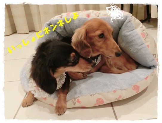 CIMG4925-20121019.jpg