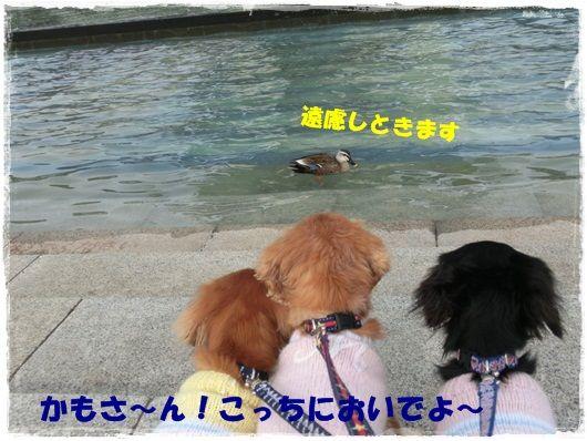 CIMG9721-20130123.jpg