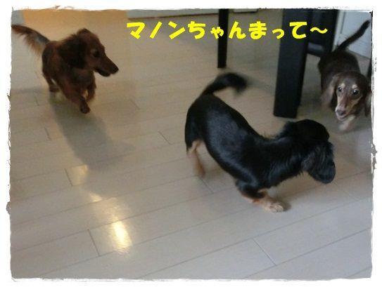 CIMG7189-20121202.jpg
