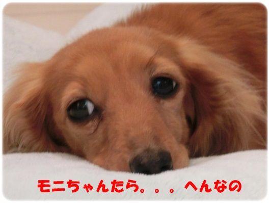 CIMG3-20130425_20130425202054.jpg