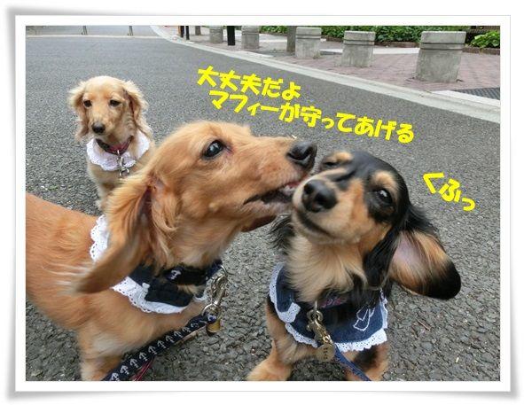 7_20130619103304.jpg