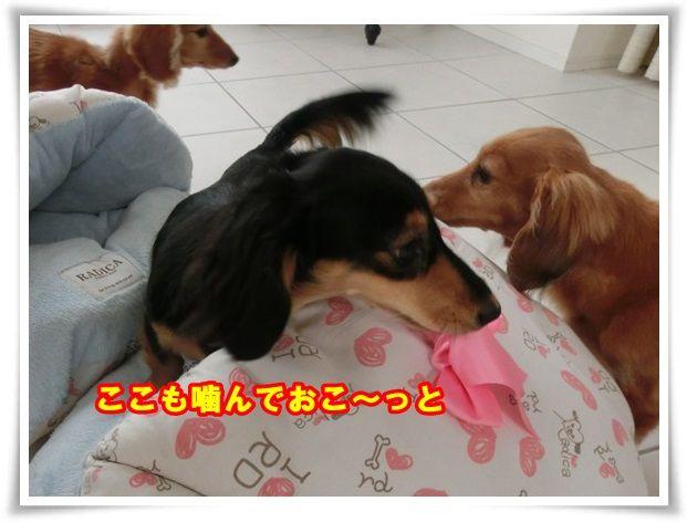 4_201310271209507fa.jpg