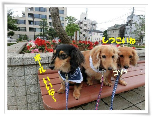 CIMG7817-20130626.jpg