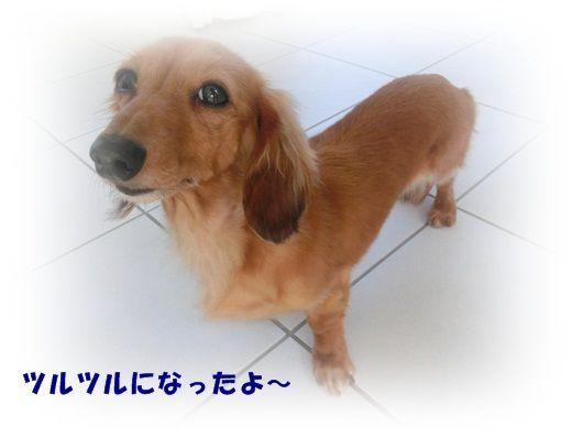 CIMG4699-20121016.jpg