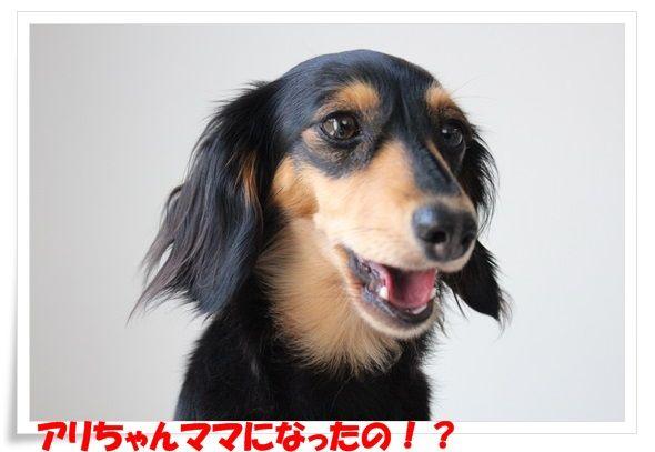 2_20130726102251.jpg