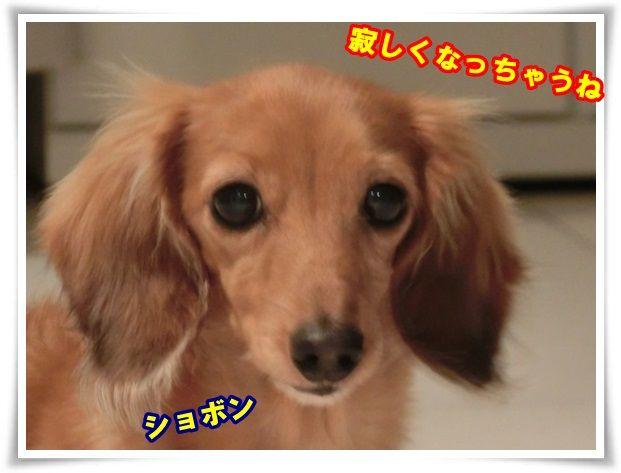 6_201310192115529b1.jpg