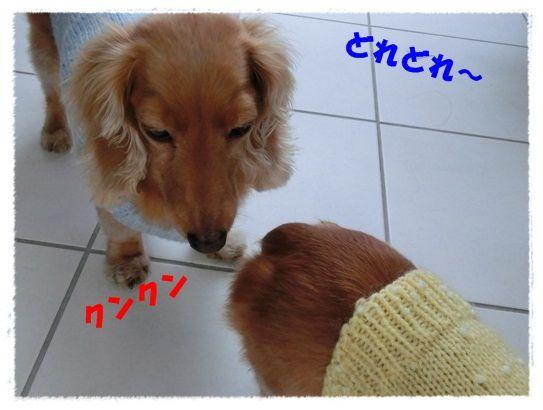 CIMG6348-20121122.jpg
