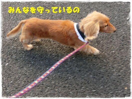 CIMG6289-20121121.jpg