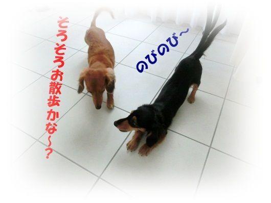 CIMG4778-20121018.jpg