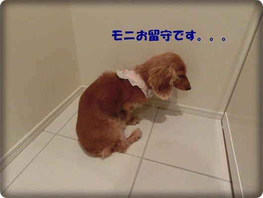 CIMG5052-20121021.jpg