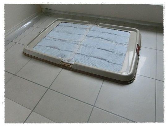 CIMG6426-20121208.jpg