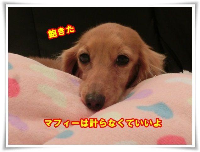 9_201312211128489b0.jpg