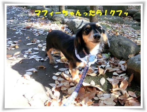 CIMG6072-20121116.jpg