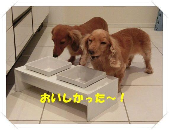 CIMG6042-20121116.jpg