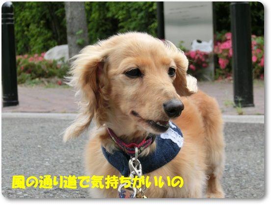 11_20130529131215.jpg