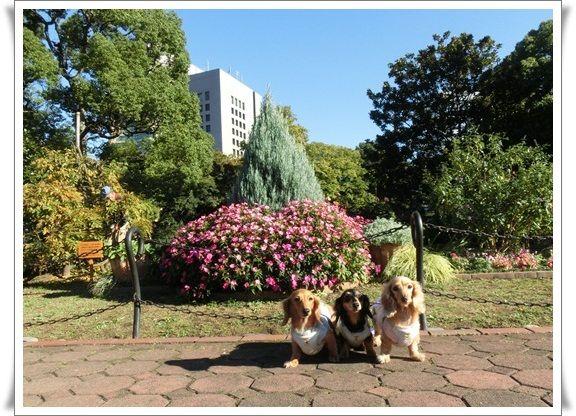 CIMG5758-20121111.jpg
