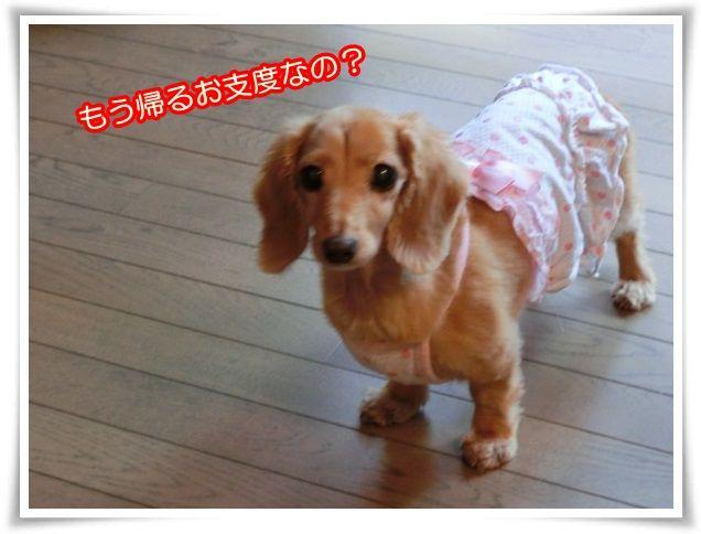 1_20140812083404eda.jpg