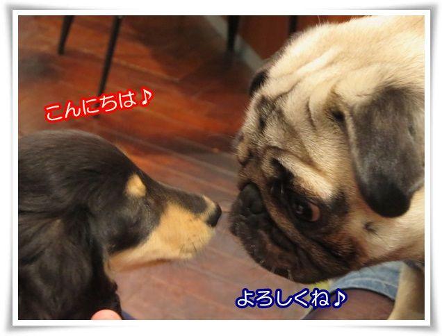 4_201403302200095ec.jpg