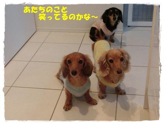 CIMG5669-20121114.jpg