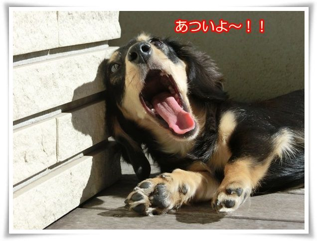 10_201410150443187ff.jpg