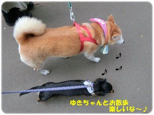 CIMG4591-20121015-20121015.jpg
