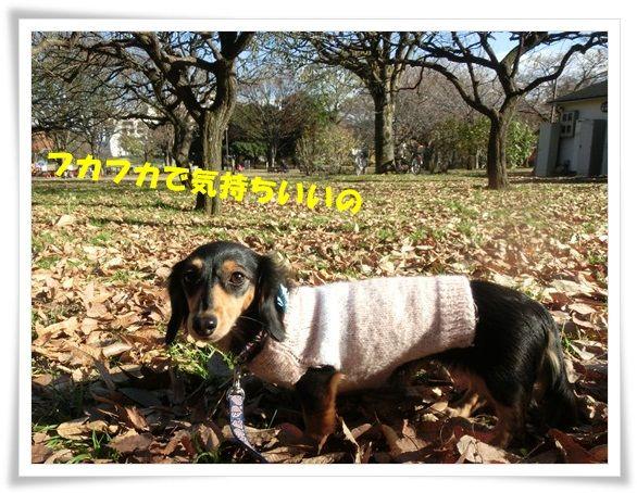 CIMG7753-20121206.jpg