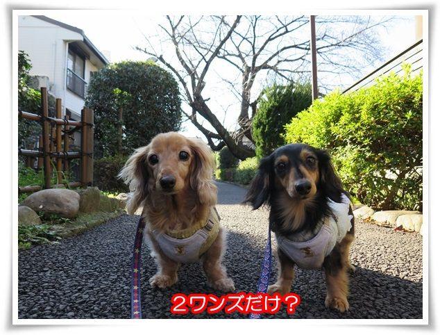 14_20151226194401e2f.jpg