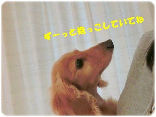 CIMG8-20130425_20130425202119.jpg