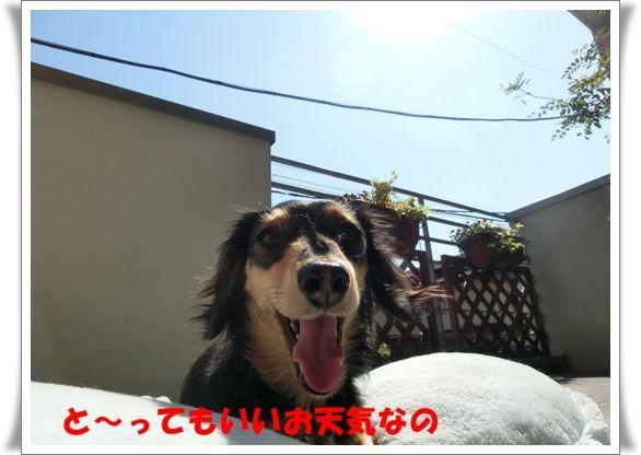 CIMG4415-20130427.jpg
