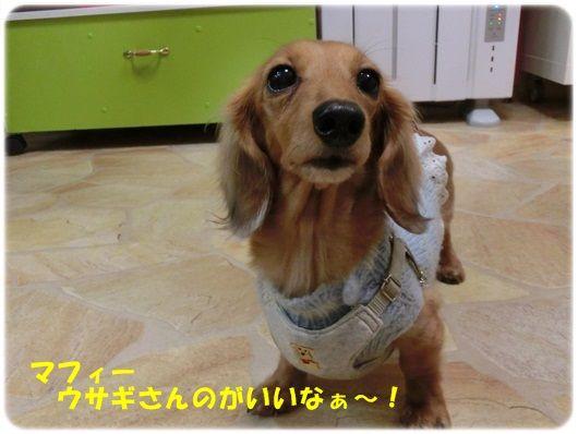 CIMG5796-20121112.jpg