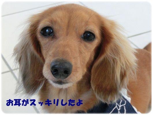 CIMG8057-20121210.jpg
