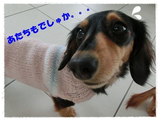 CIMG6341-20121122.jpg