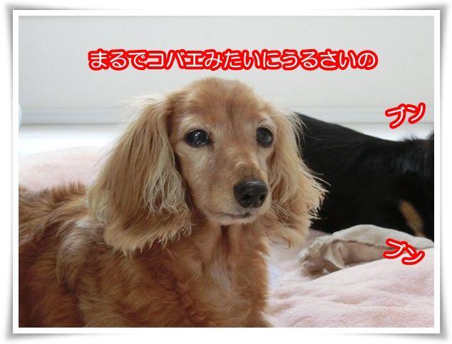 10_201508302030477b3.jpg