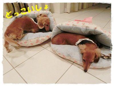 CIMG4983-20121019.jpg