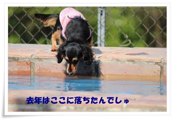 IMG_6432-20130502.jpg